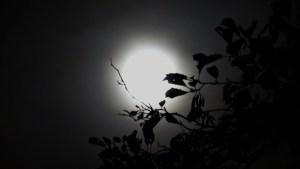 2015-volle-maan-van-de-klif-015