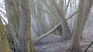 bomen in een winters bos