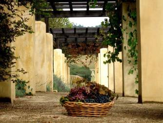 autumn basket and grapes