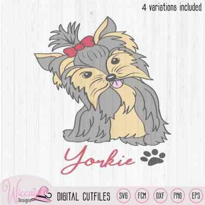 Cute Yorkie dog, Yorkshire terriër