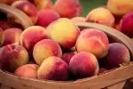 BASKET OF PEACHES-3