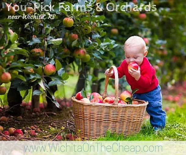 Apple picking places near Wichita