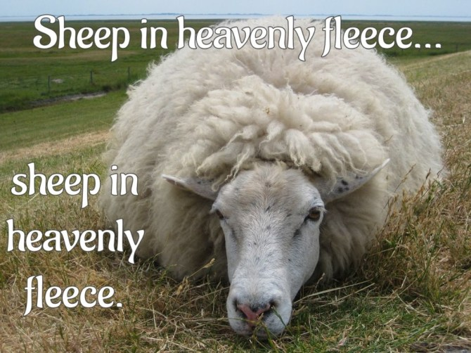 Sheep (in heavenly fleece)