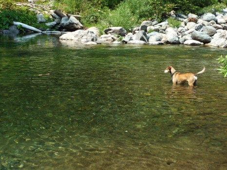 Honey on the Yuba in Ca.