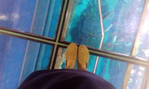 Under my feet are sooo many sharks!!
