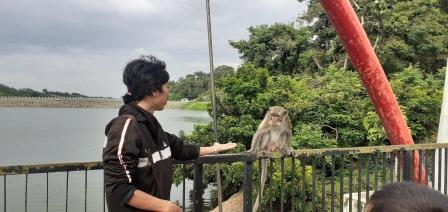 Kera di Goa Kreo Semarang