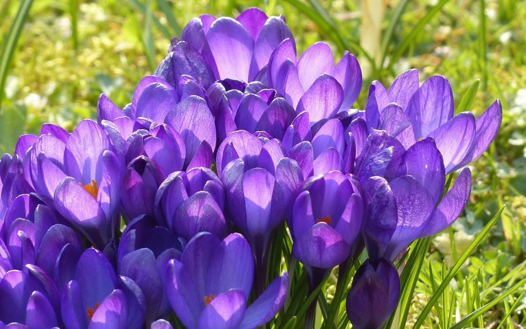 Happy Spring Potluck!
