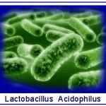 Laktobakterie  –  błogosławieństwo  dla  naszych  jelit
