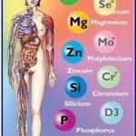 Jak  działa  układ  immunologiczny?