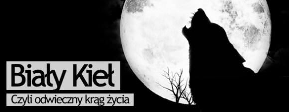 Bombla_BiałyKieł