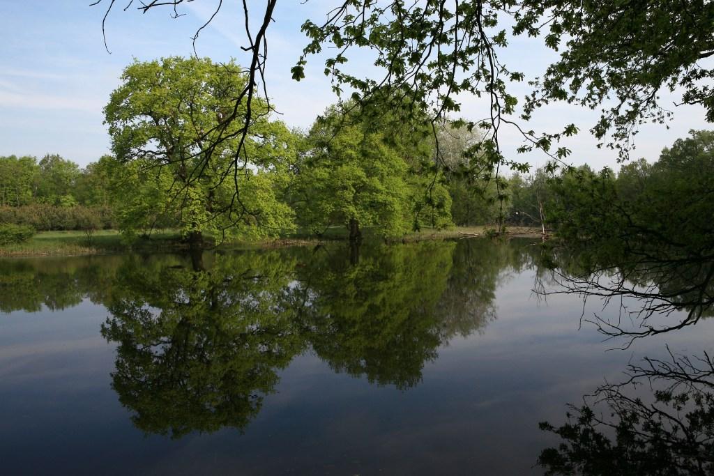 Rzeka Warta w okolicy Czeszewa