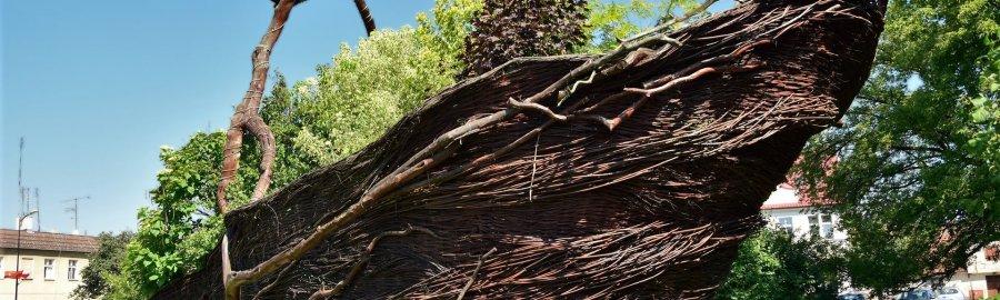 Największy na świecie kosz wiklinowy w Nowym Tomyślu