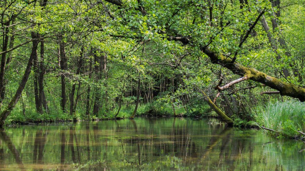 Rzeka Rurzyca, szlak kajakowy przez las