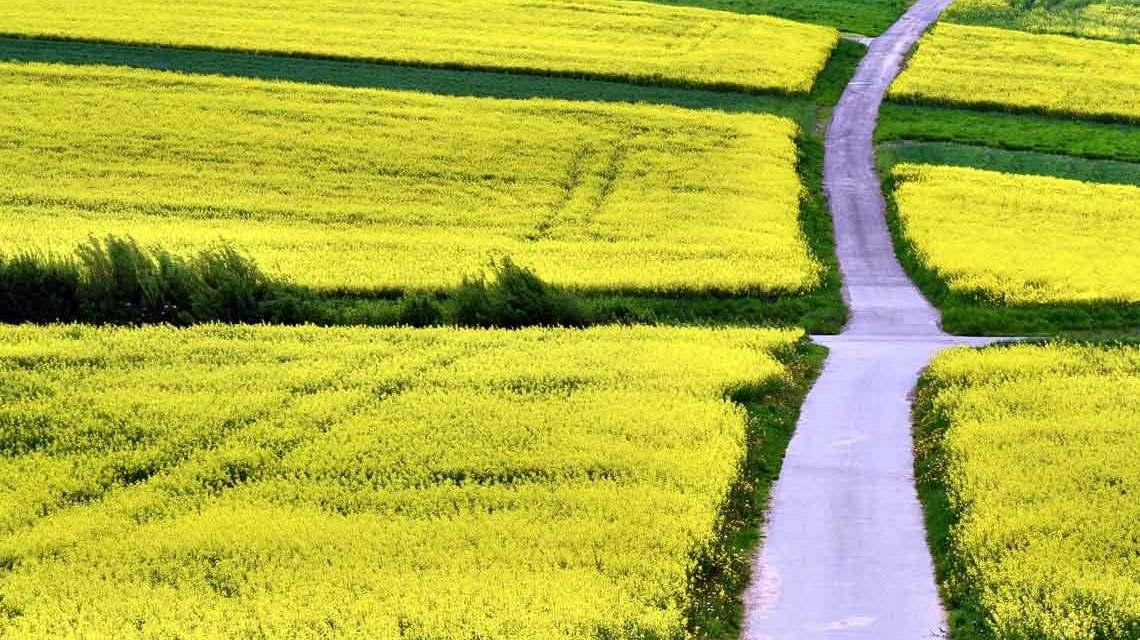 Wege, Wiese, Felder ... wenn Menschen pilgern führt sie der Weg zum Ziel. Symbolbild: Andreas Hermsdorf / pixelio.de