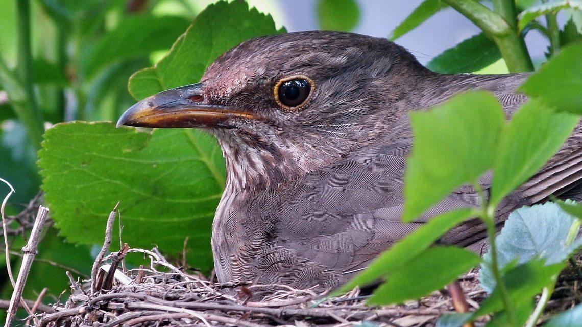 Wenn Vögel im Nest hocken… Bild: Dieter Schwane / pixelio.de