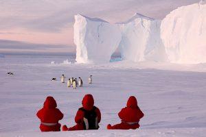 Arktisbewohner unter Beobachtung. Bild: Steven Franke
