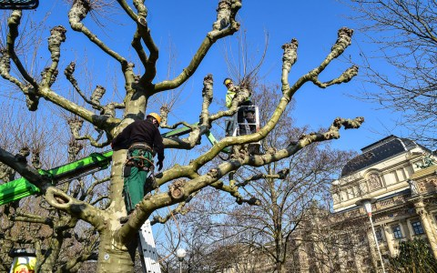 Archivbilkd: Baumarbeiten auf der Wilhelmstraße. Bild: Volker Watschounek