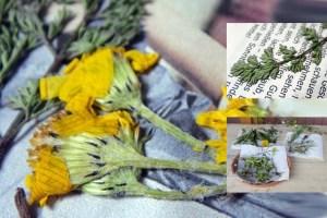 Pflanzen sind reizvoll. Man kann vieles damit machen. Bild: Flickr / CC / silvmedia.de