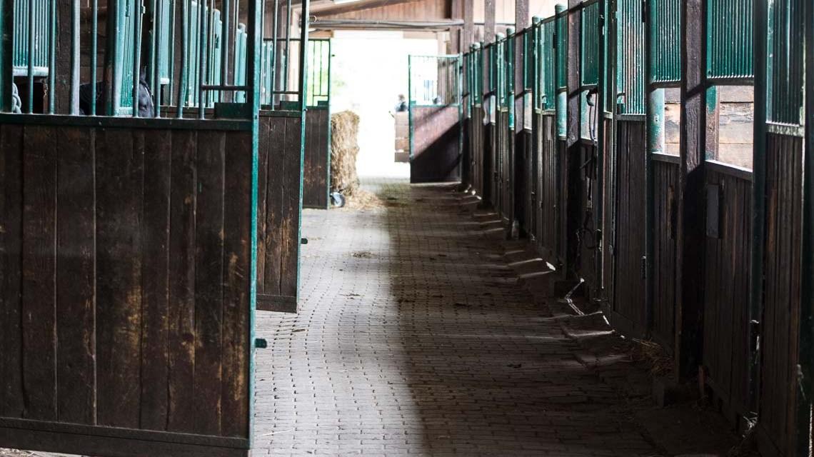 Reiten in Wiesabden: Hofgut Adamstal