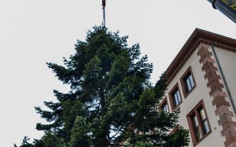 Die Aufstellung des Weihnachtsbaums läutet in Wiesbaden traditionell die Weihnachtszeit ein. @2015 Volker Watschounek