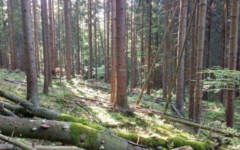 Archivfoto: Unterwegs im Wald. ©2018 Lars Müller / CC BY 2.0 / Flickr