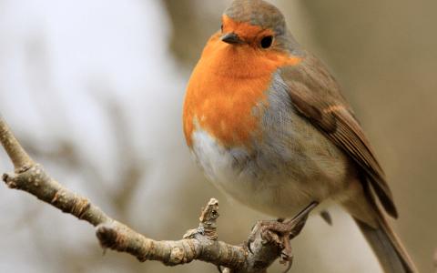 Der Vogel im Bild wartet auf den Frühling. In Wiesbaden ist der Frühling schon fast vorbei. ©2018 Richaer Evea / Flickr / CC BY-SA 2.0
