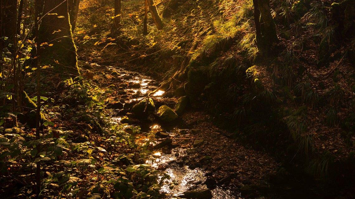 Bachlauf, ähnlich dem Gehrner Bach. ©2018 Norberg Reimer / Flickr / CC BY SA 2.0
