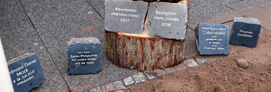 Baumpatenm der neuen Haseln auf der Taunusstraße. ©2018 Volker Watschounek