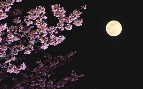 Das Osterparadoxon / Darum fällt der Ostertermin 2019 aus dem Rahmen: Der erste Frühlingsvollmond bestimmt den Ostertermin. Die Berechnung des Termins sorgt 2019 für Verwirrung. ©2019: WetterOnline / Shutterstock