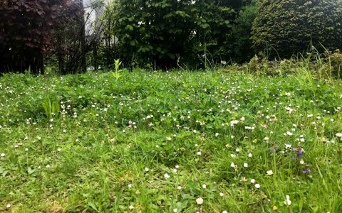 Nachhaltige Rasenpflege, Blumenwiese. ©2019 Volker Watschounek