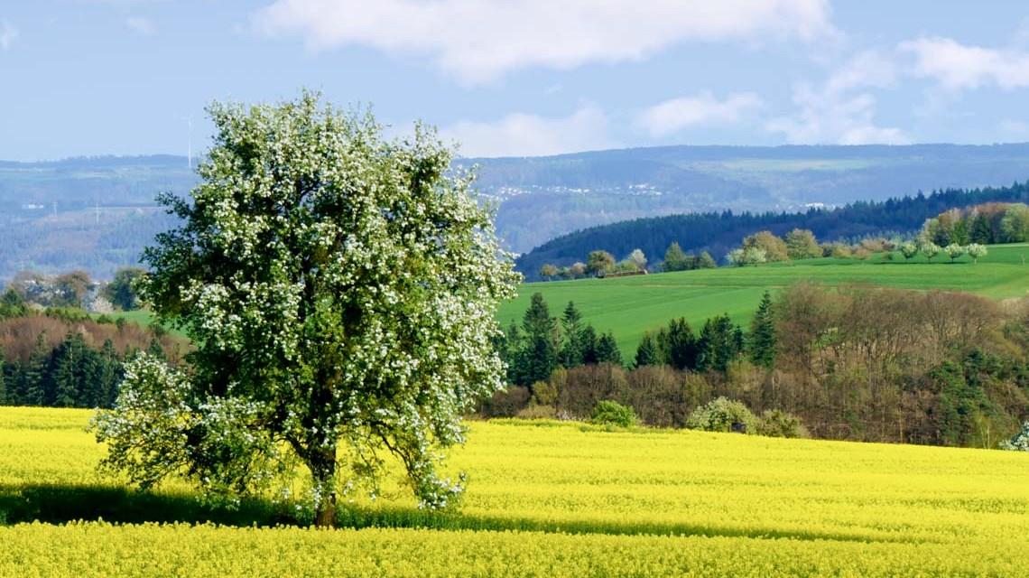 Frühlingswald, die Natur erwacht. ©2019 Norbert Reimer | Flickr / CC-BY-SA-20