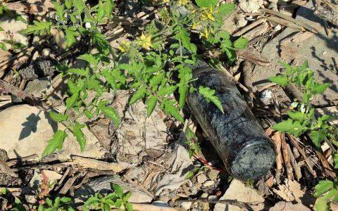 Altglas gefunden beim Rhine CleanUp
