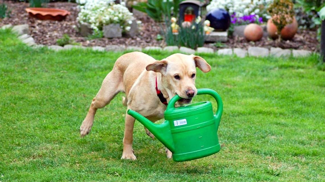Sam ist kein Wohnbetreuer, er hilft trotzdem im Garten von Günther Hentschel | Flickr | CC BY-ND 2.0