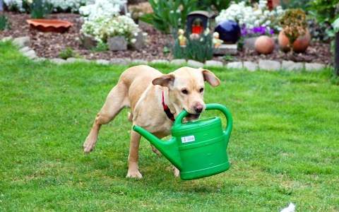 Sam ist kein Wohnbetreuer, er hilft trotzdem im Garten von Günther Hentschel   Flickr   CC BY-ND 2.0