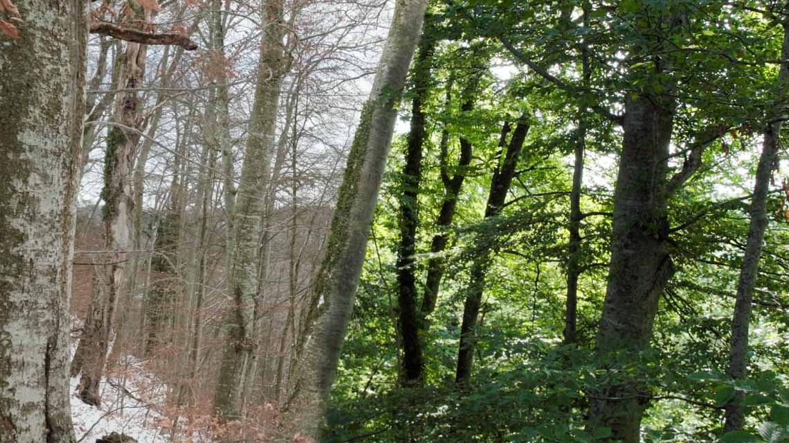 Szenenfoto –… Constantin Film Verleih GmbH / nautilusfilm Winter- und Sommerwald im Vergleich.