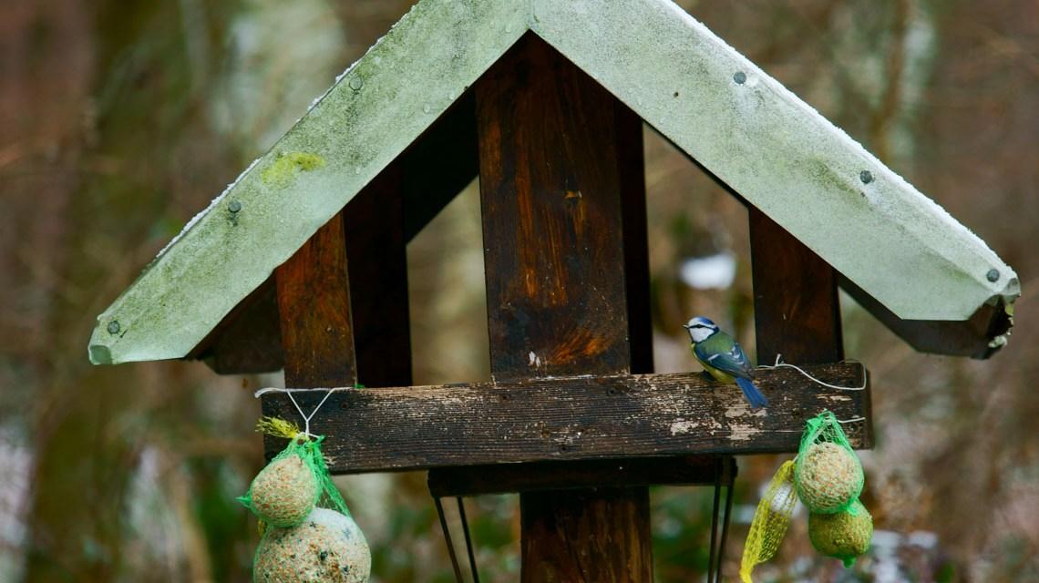 Vogel Imbiss von Lutz Blohm. Flickr   CC BY-SA 2.0