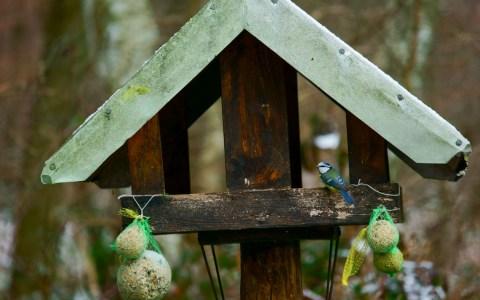 Vogel Imbiss von Lutz Blohm. Flickr | CC BY-SA 2.0