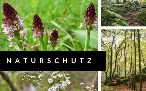 Naturschutz in den Waldwiesentälerna