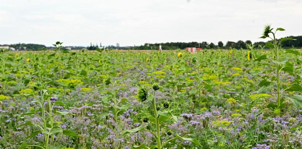 Vorstellung einer von 94 Blühflächen der Hegegemeinschaft Wies