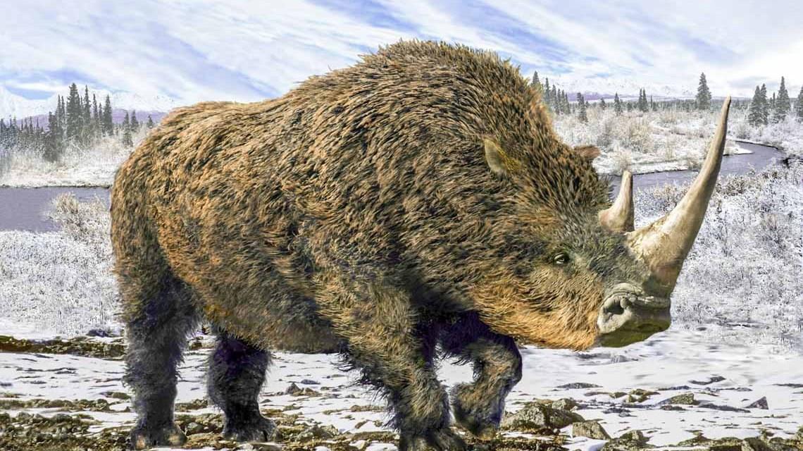 Das Wollnashorn (Coelodonta antiquitatis) lebte in den eiszeitlichen Kältesteppen zwischen Westeuropa und Ostasien. Foto: iStock/aleks1949