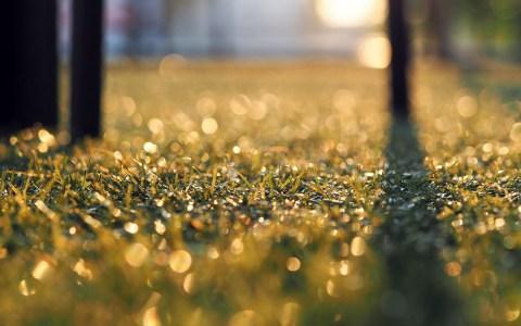Kunstrasenplatz ©2020 Bild von Eak K. auf Pixabay
