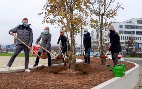 Baumpflanzungen im Kulturpark