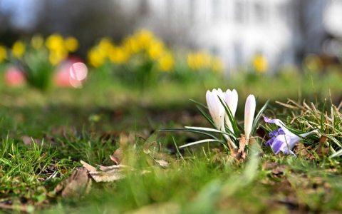 Frühling, Frühlingsanfang 2021