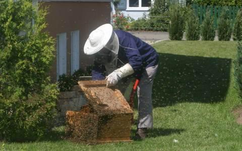 Imker im Garten inmitten eines Bienenvolk