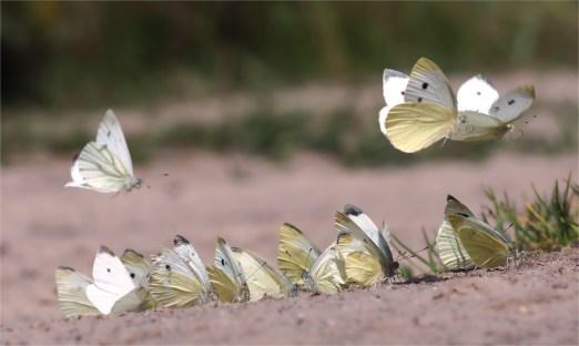 Ankunft der Engelchen