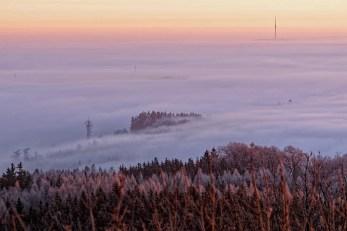 Die Baumgruppe im Nebel