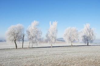 Die Birken am Lochberg