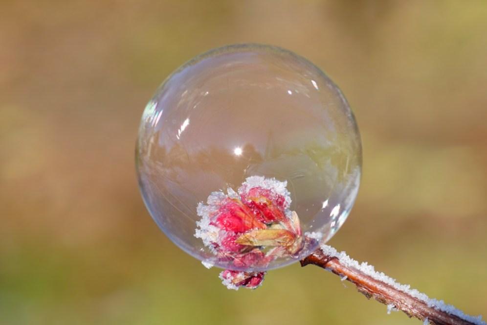 Die frostige Knospe in der Seifenblase