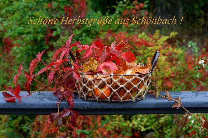 Herbstlaub in Schönbach