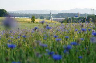 Schönbach, Kirche, Kornblumen